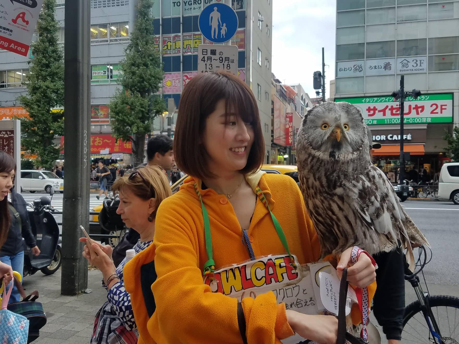 Owl cafe, Tokyo