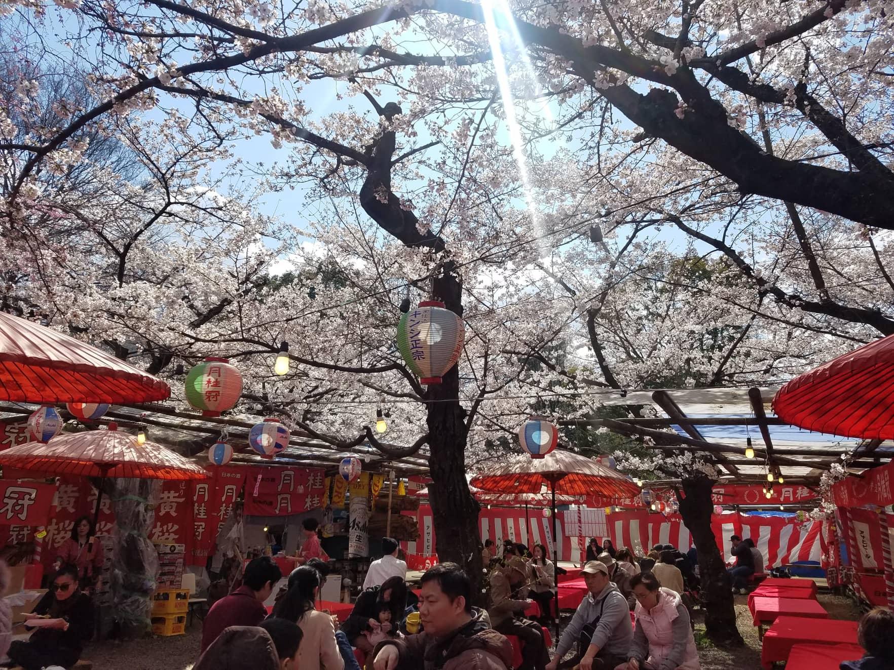 Hanami, Kyoto