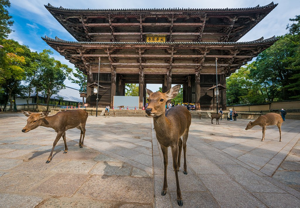 nara-japan-deer-nandaimon