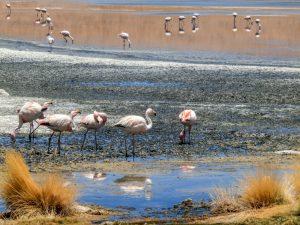 Salt flats and lagoons, Bolivia