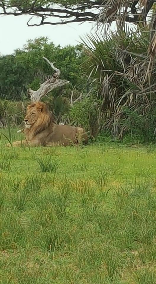 Танзания и Занзибар – люлката на цивилизацията