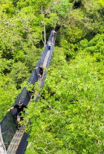 Най- високата платформа в цялата Амазонска джунгла