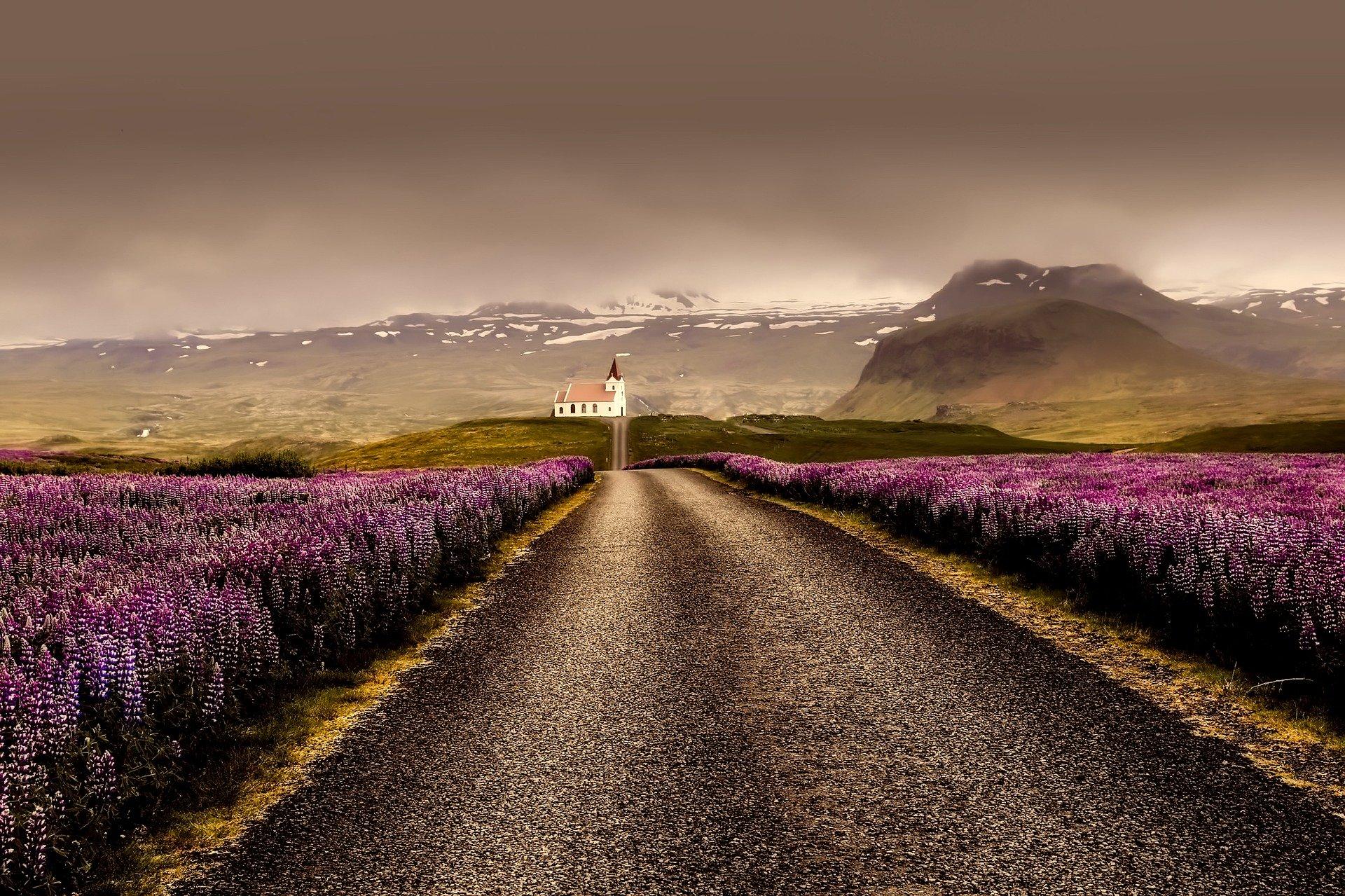 Flowers, Iceland