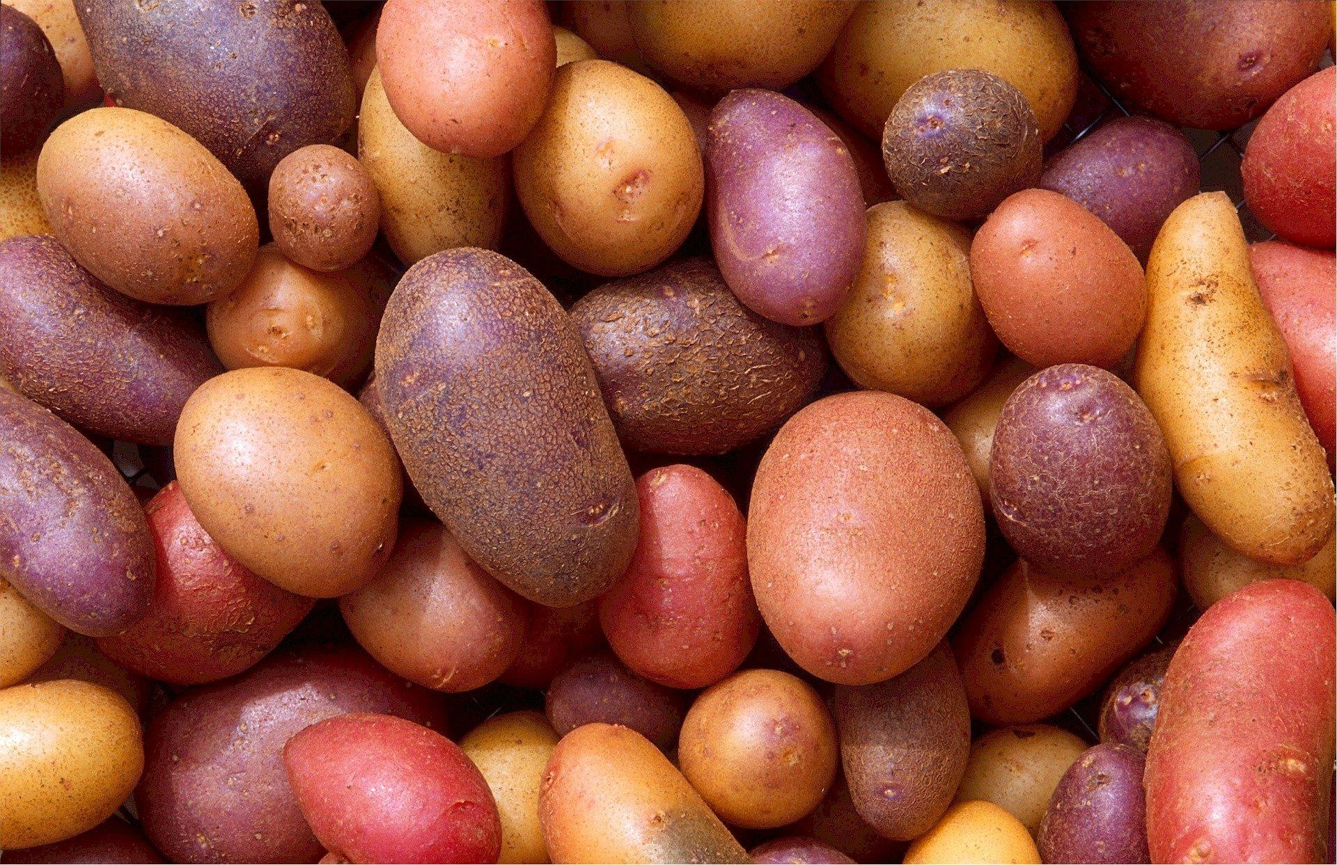 И как картофите спечелили една война!