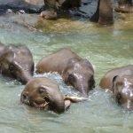 Малки слончета