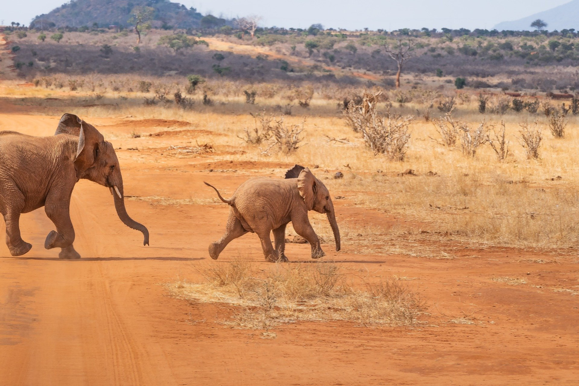 15 интересни факта за африканските слонове!