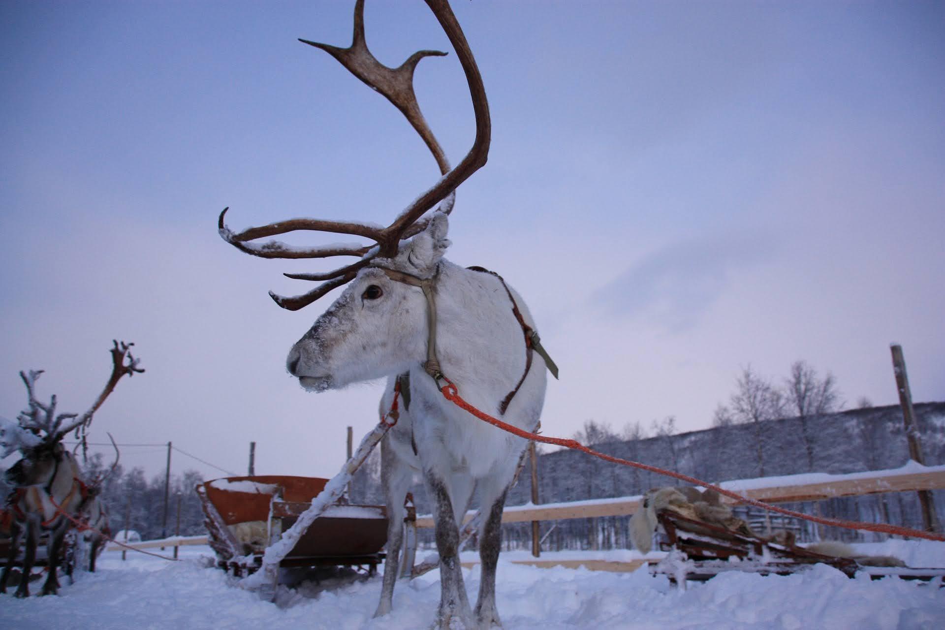 ЛАПЛАНДИЯ – екскурзия до домът на дядо Коледа! С включено посещение на столицата на Финландия – Хелзинки!