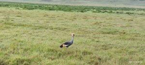 Райска птица, в кратера Нгоронгоро, група 2021г.