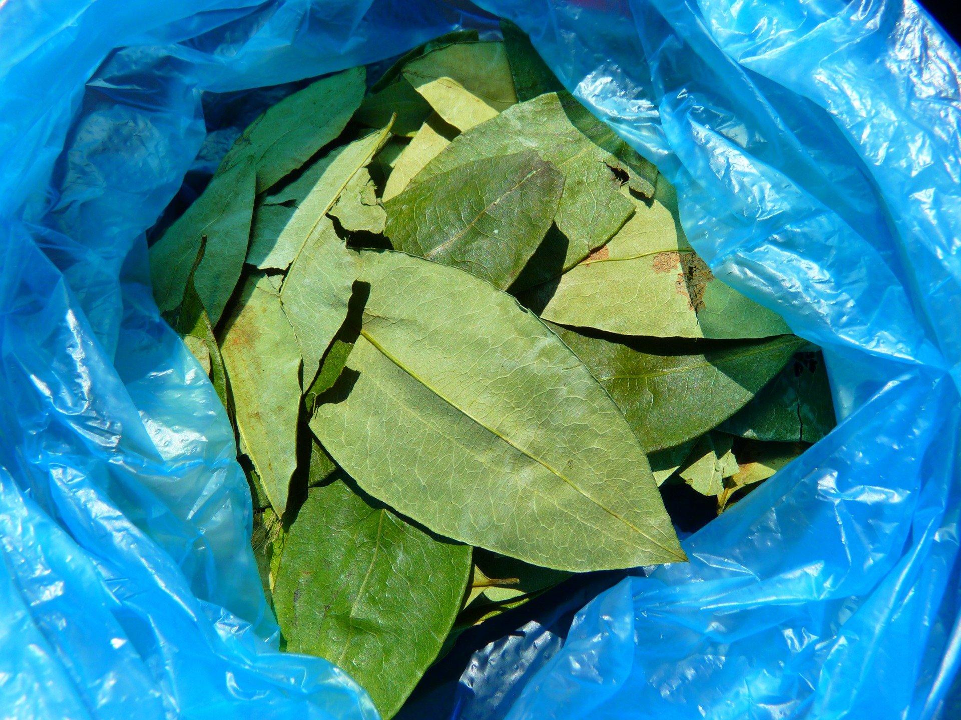 Листа от кока- продават се навсякъде за да не се чувства височинната болест