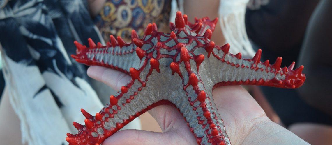 Известната морска звезда на Занзибар